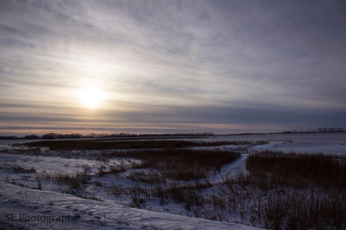Reeds and Winter sun - WM