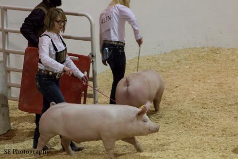 Savannah - Swine - WM