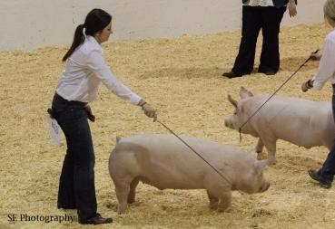 Shelby H - Swine - WM