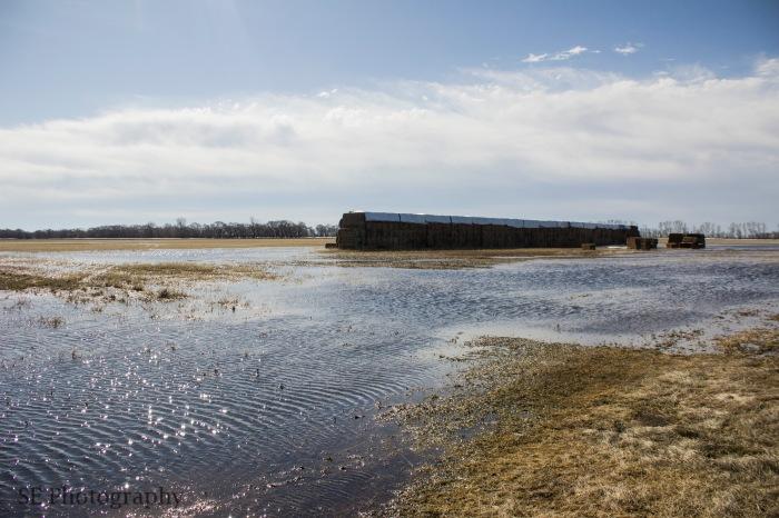 Flooded Hay - WM